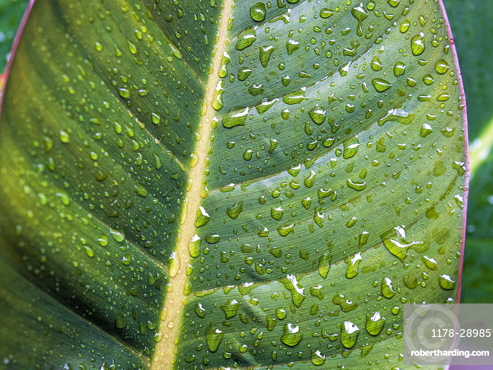 Dew droplets on leaves
