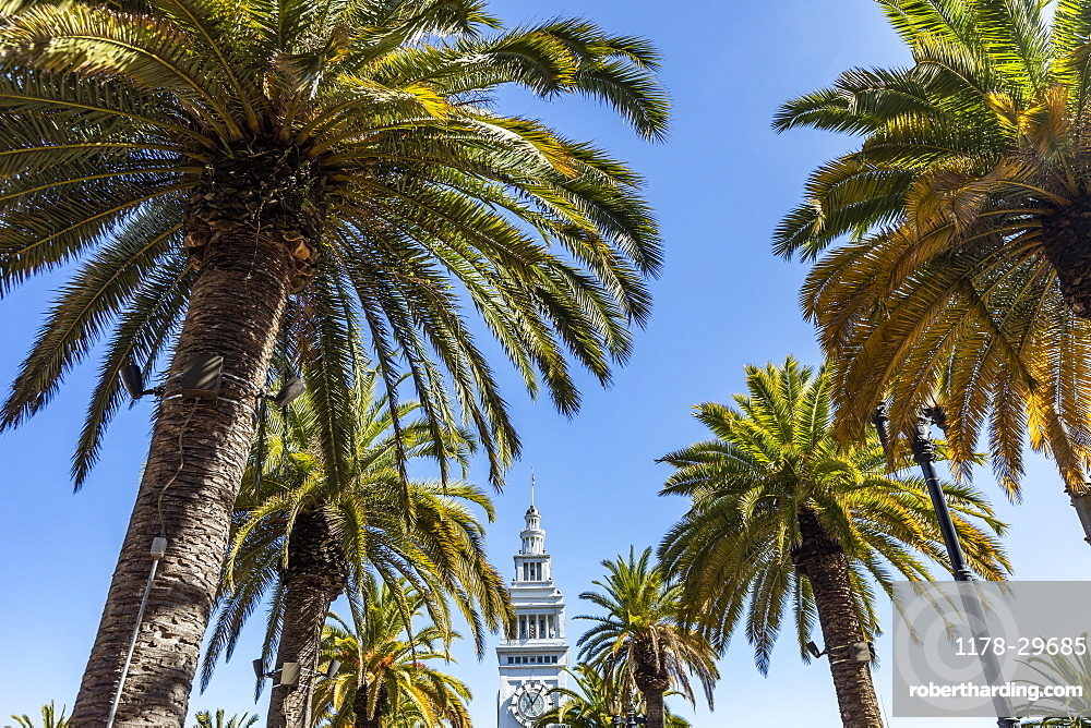 USA, California, San Francisco, Palm trees and top of tower against clear sky