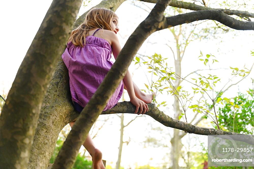 Girl (6-7) sitting in tree