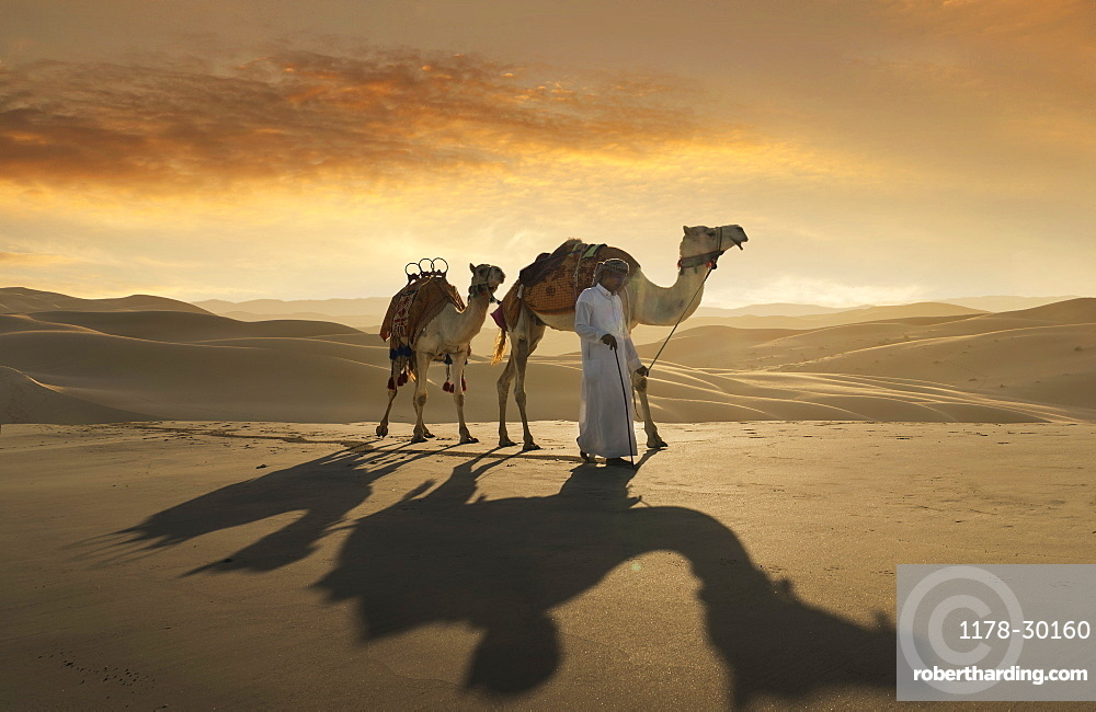 United Arab Emirates, Dubai, Man leading camels in desert