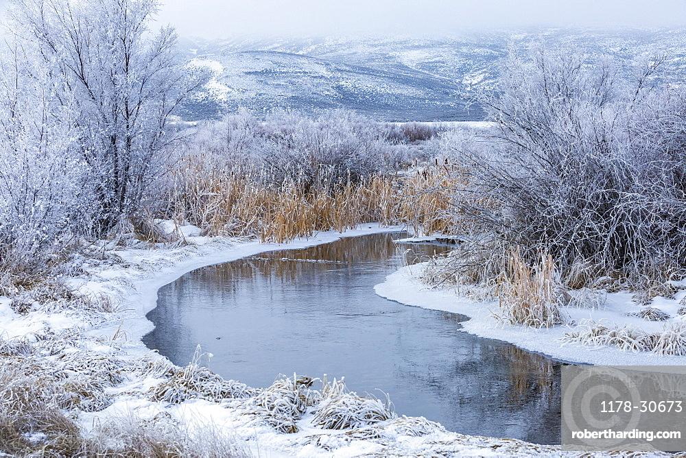 USA, Idaho, Bellevue, Snowy winter landscape with creek among trees