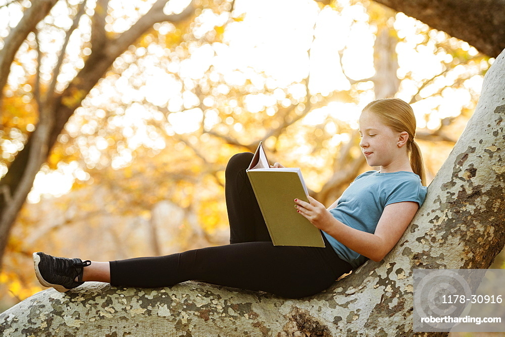 United States, California, Mission Viejo, Girl (12-13) sitting on tree branch and reading book