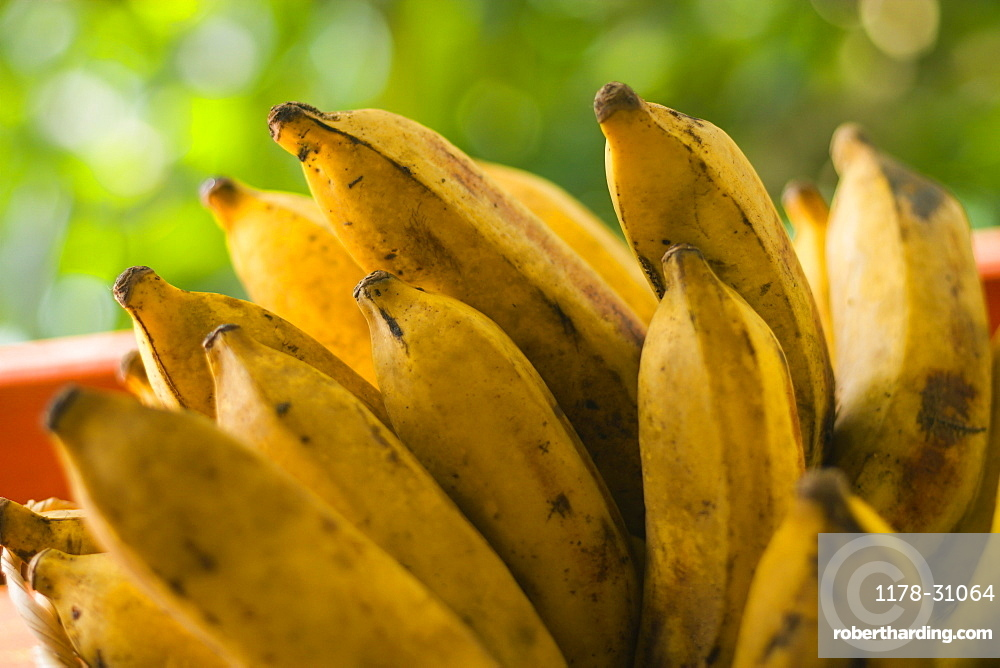 Bunch of plantains, close-up