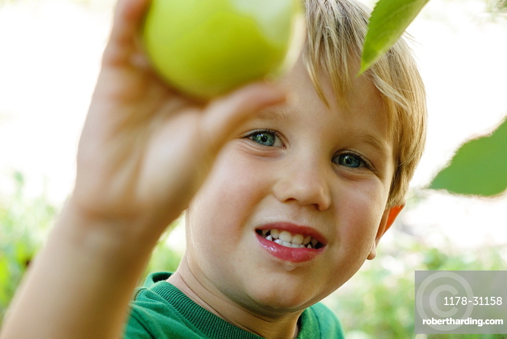 Close up of boy picking green apple on fruit farm