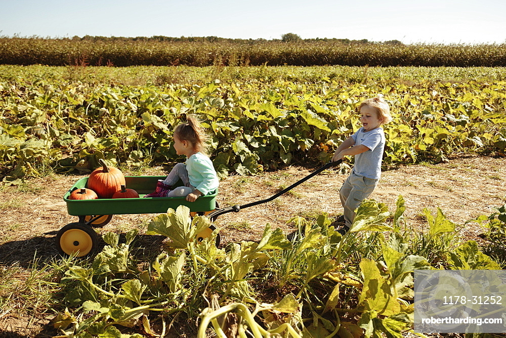Brother pulling sister in pumpkin cart