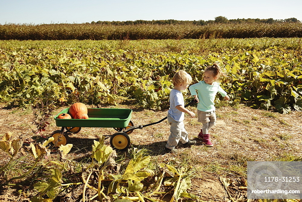 Brother and sister pulling pumpkin in cart