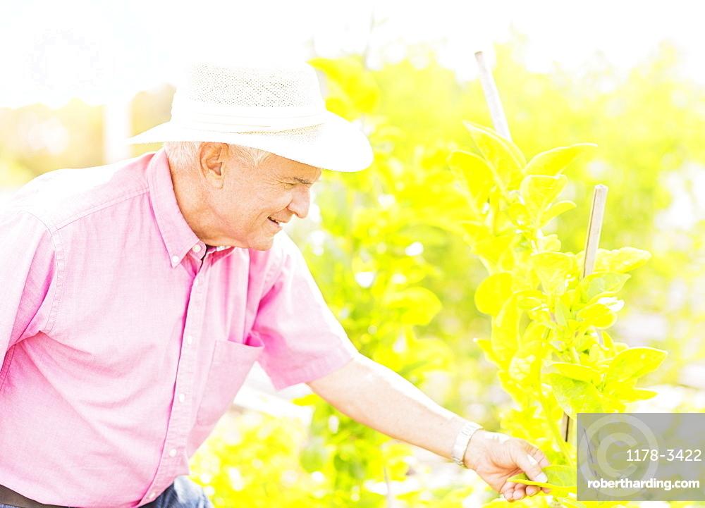 Portrait of senior man touching plant leaf in garden