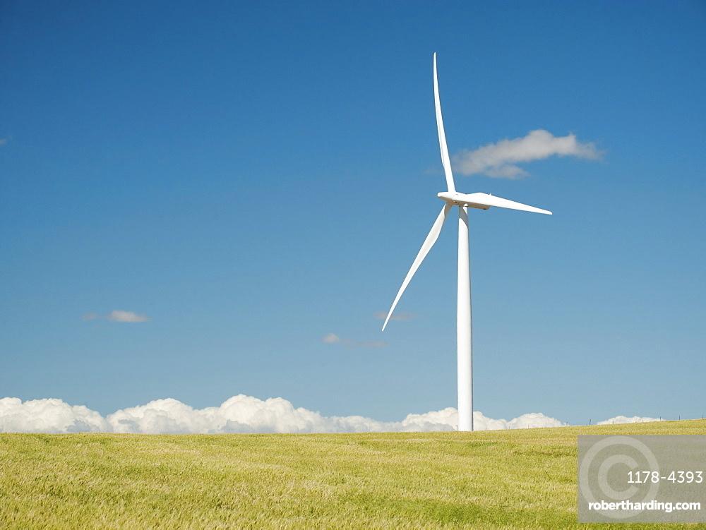 USA, Oregon, Wasco, Wheat field and wind farm in bright sunshine under blue sky