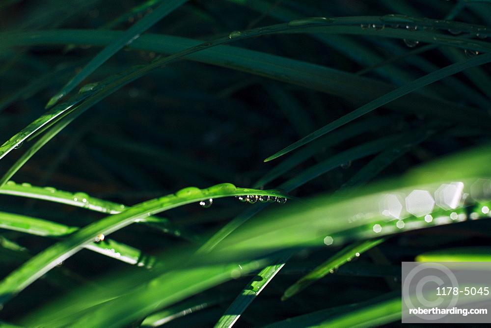 Raindrops on blade of grass