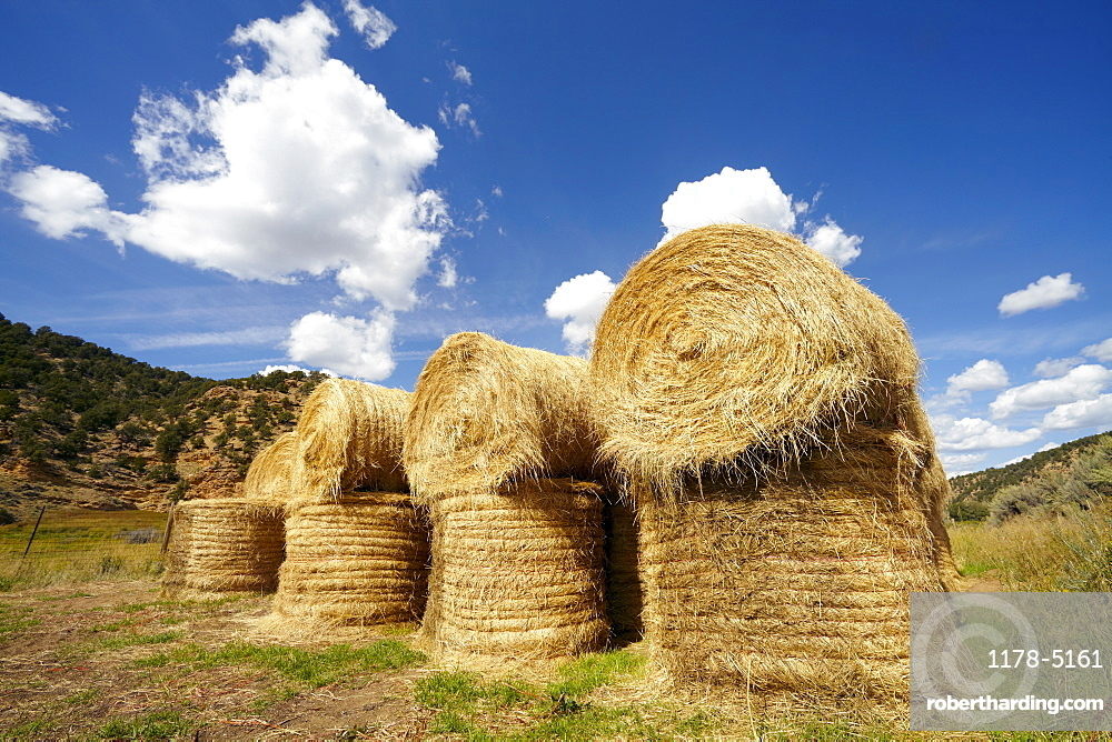 Idyllic scene of hay stacks on field, USA, Western Colorado