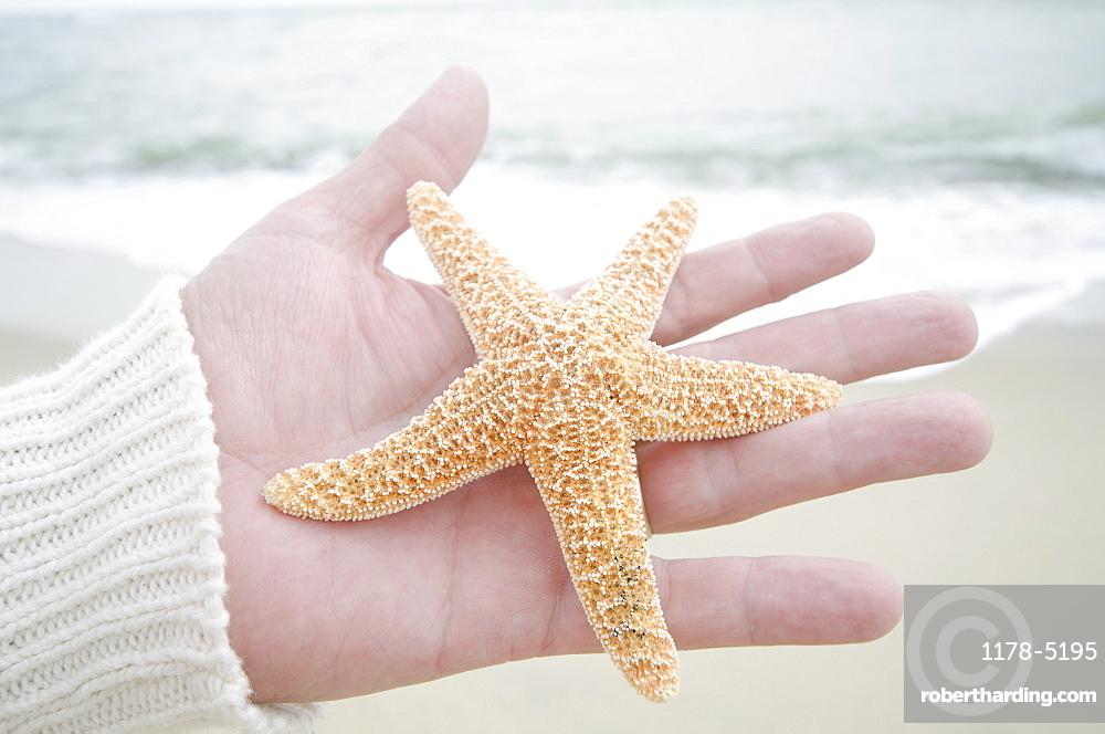 Human hand holding starfish, Nantucket Island, Massachusetts USA