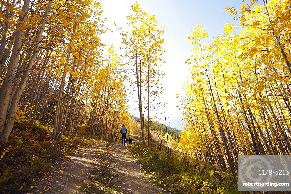 Woman walking with her dog through forest, Colorado, USA