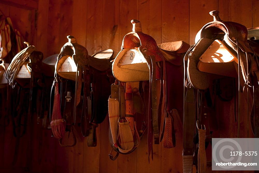 Saddles in barn