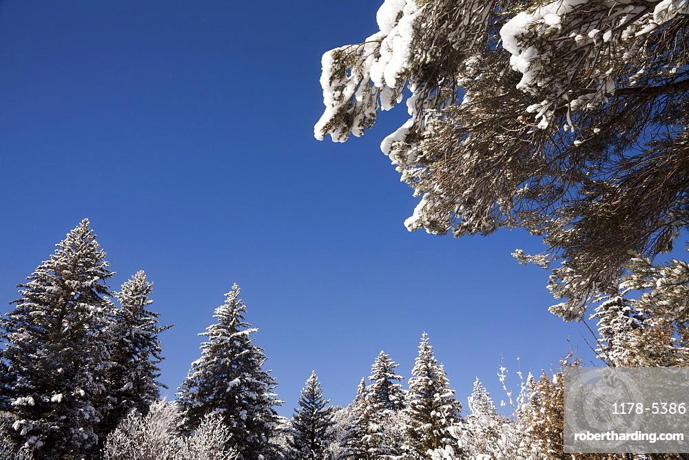 USA, Colorado, Winter landscape