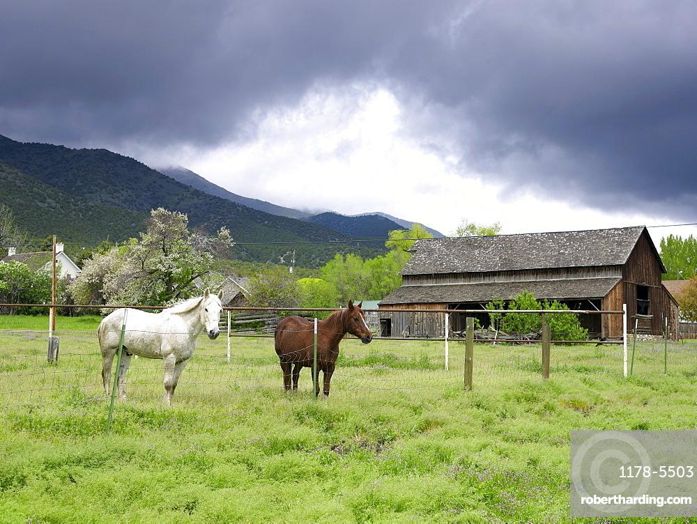 USA, Utah, Horses on ranch