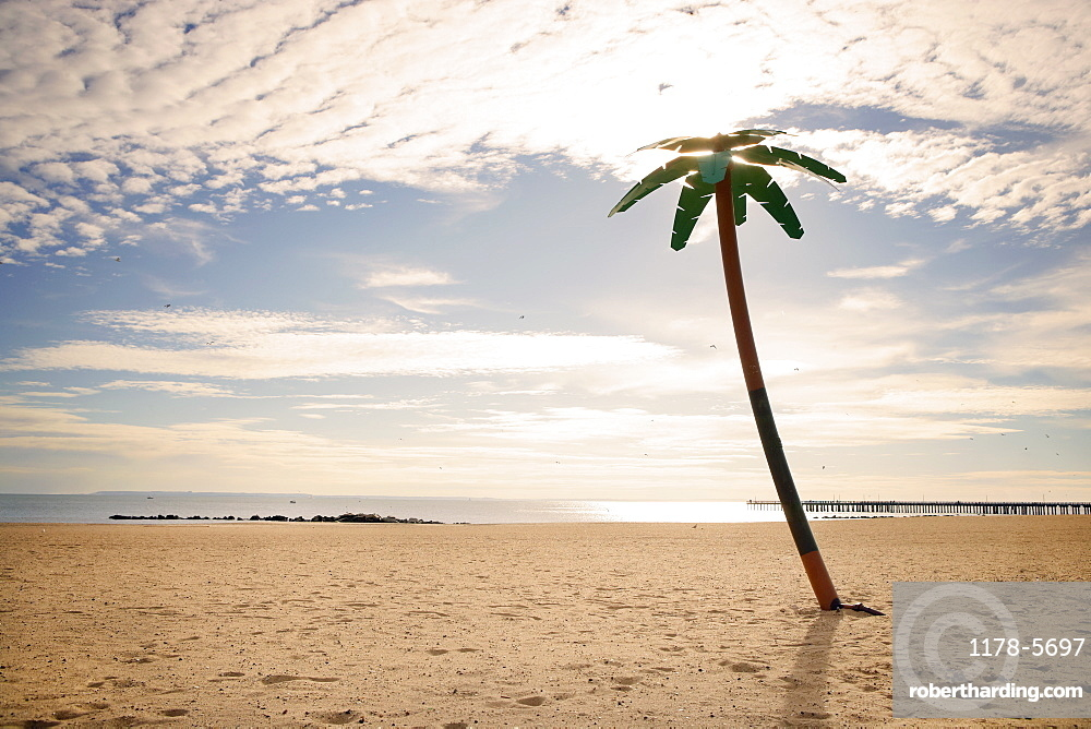 USA, New York City, Coney Island, palm tree on beach
