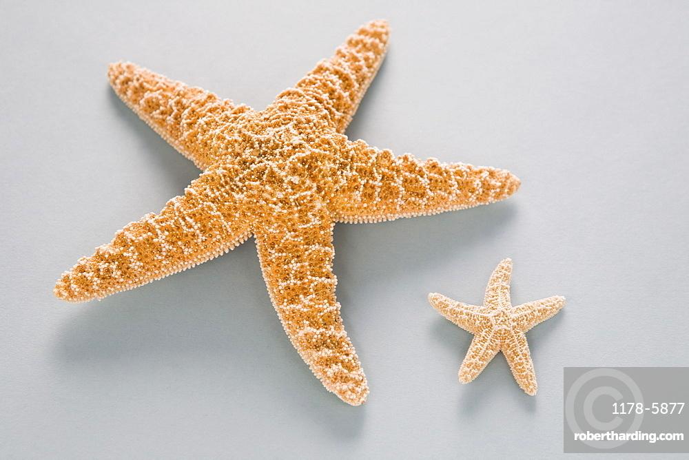 Two contrasting starfish