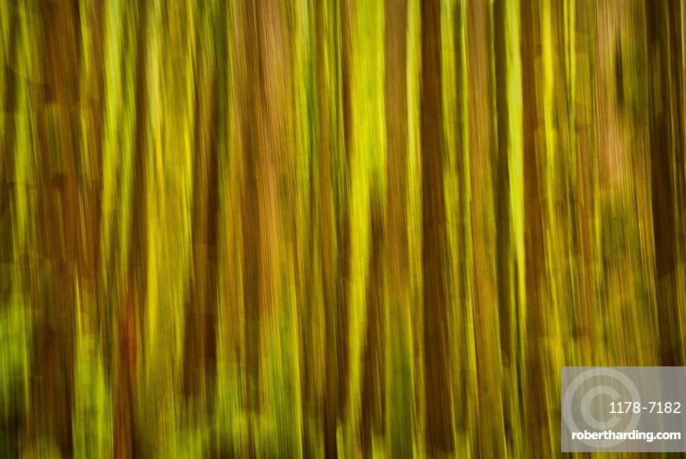 USA, Washington, Blurred tree trunks, USA, Washington