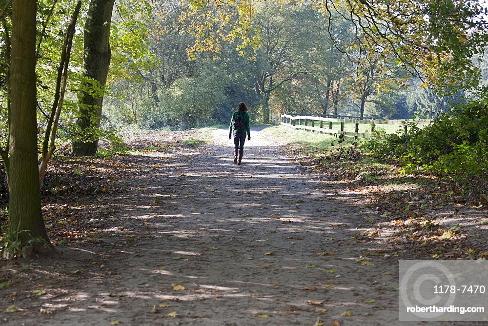 The Netherlands, Veluwezoom, Posbank, Hiker in countryside