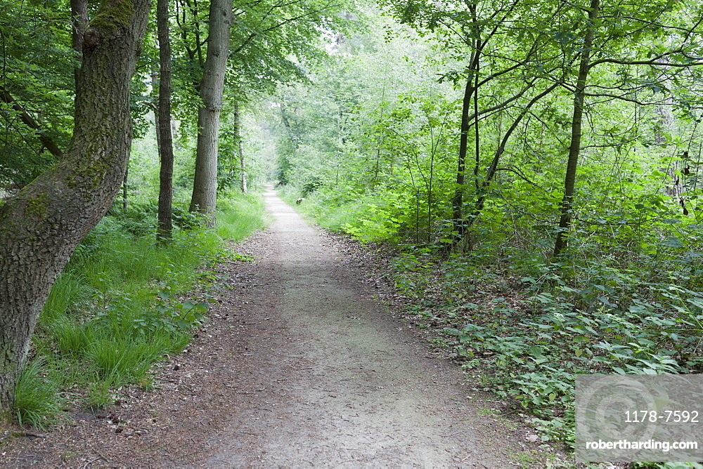 Netherlands, North-Brabant, Oisterwijk, Path in forest