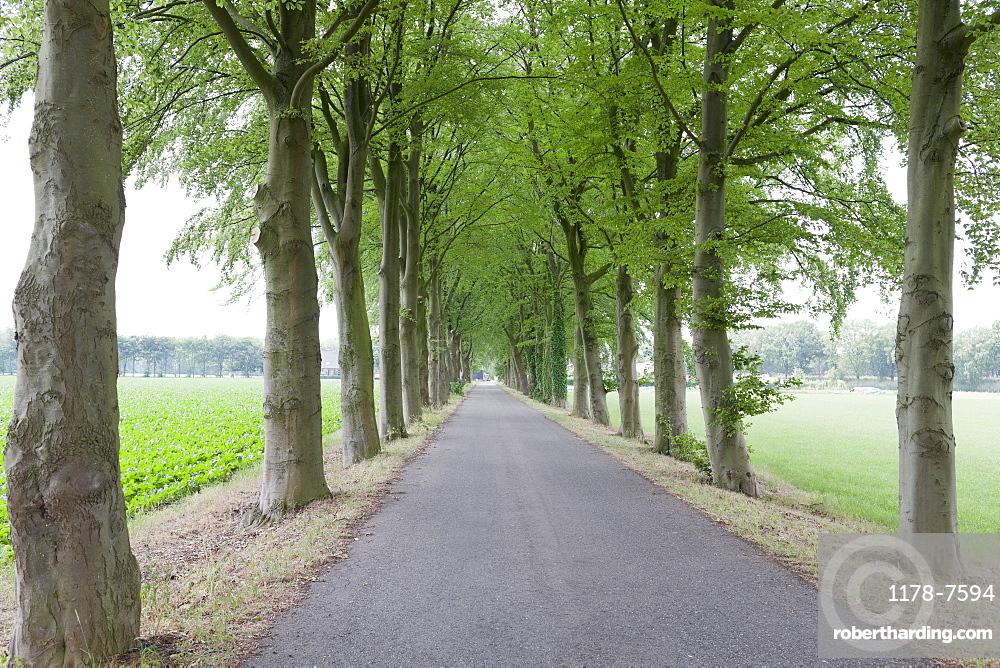 Netherlands, North-Brabant, Tilburg, Single lane road lined with trees