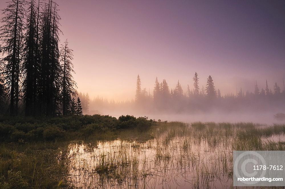 USA, Oregon, Foggy landscape at dawn