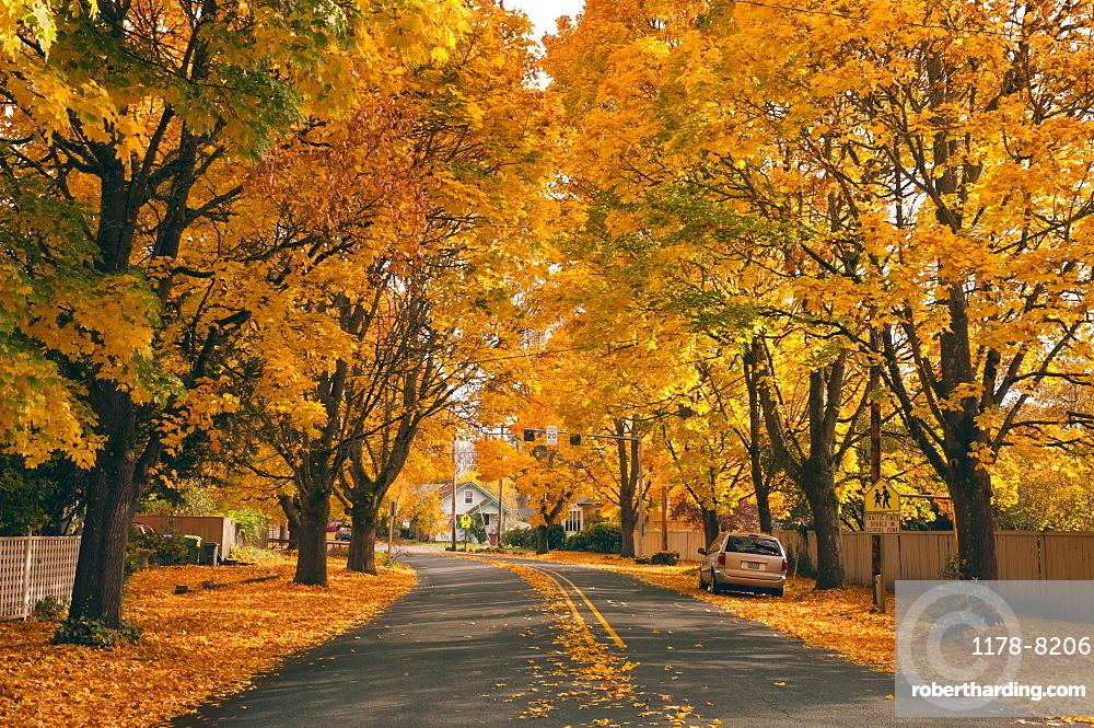 USA, Oregon, Salem, treelined autumn lane
