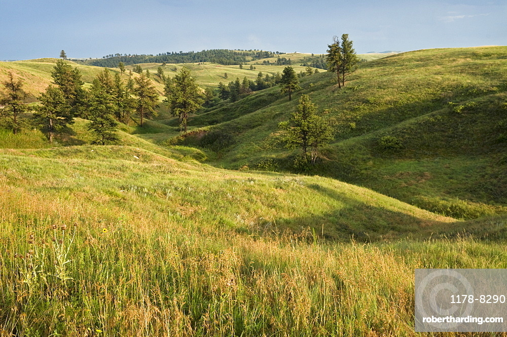 USA, Nebraska, green field