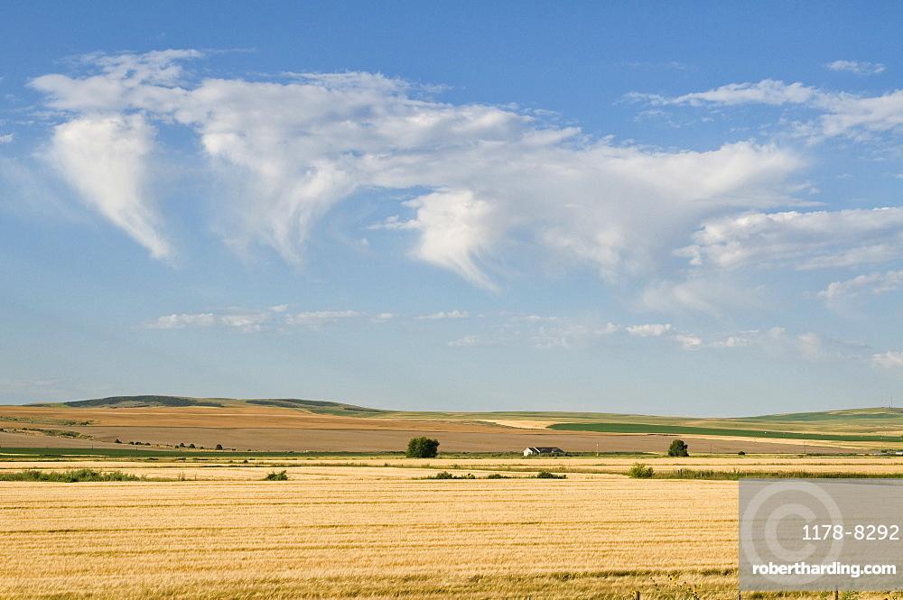 USA, Oregon, Clouds over wheat field