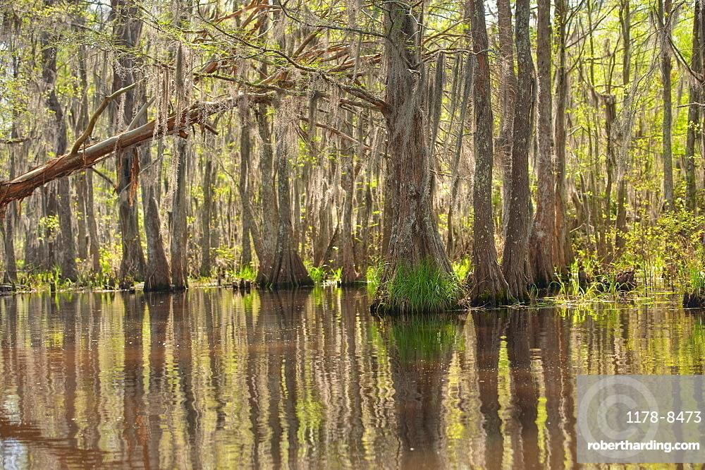 Honey Island Swamp in White Kitchen Nature Preserve