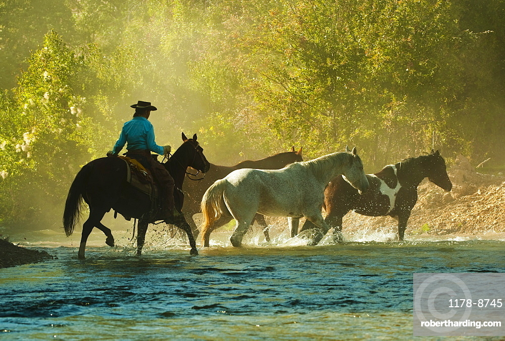 Horseback rider herding horses