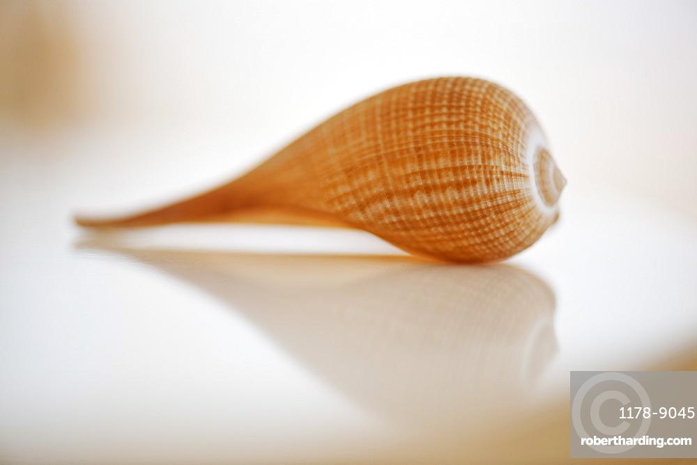 Close up of sea shell