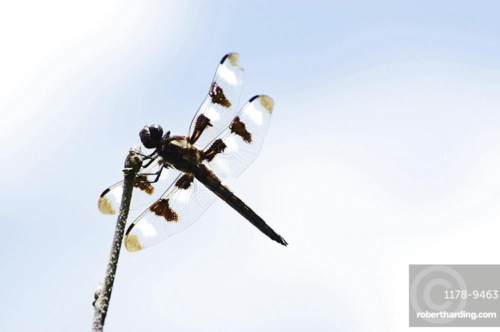 Dragonfly perching on branch