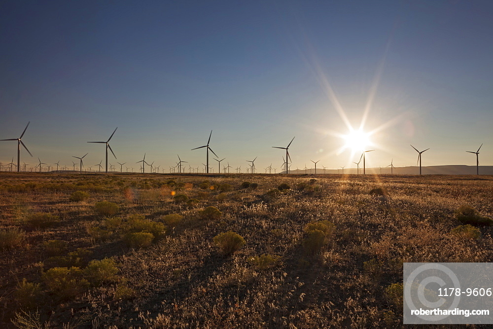 Wind turbines in field at sunset, Oregon