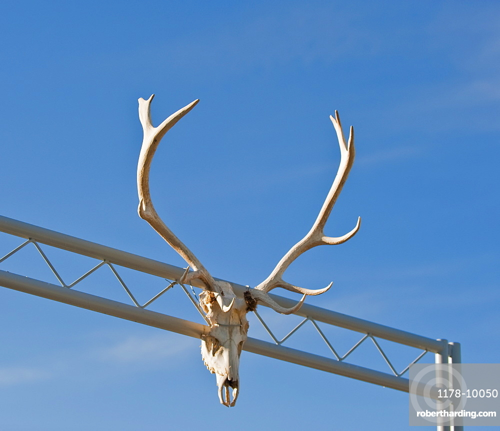 Antlers on gate