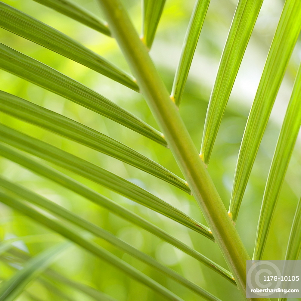 Close up of palm leaf