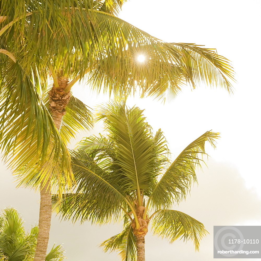 Sunlight on tropical palm trees