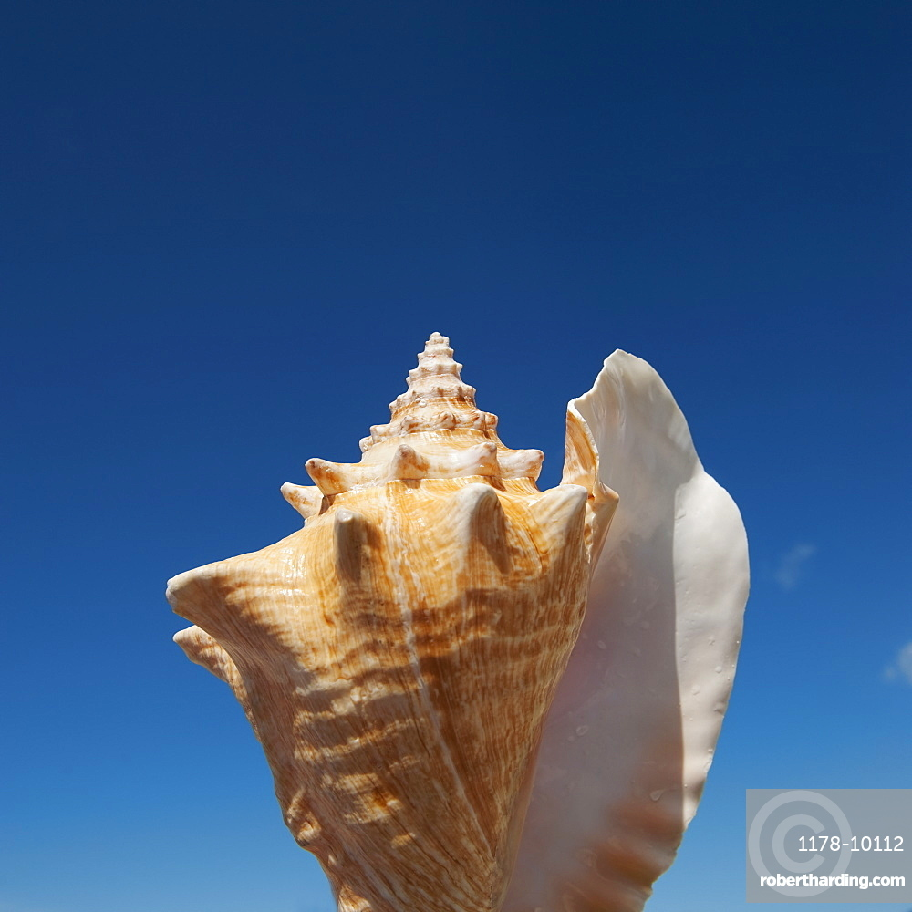 Close up of conch shell against blue sky