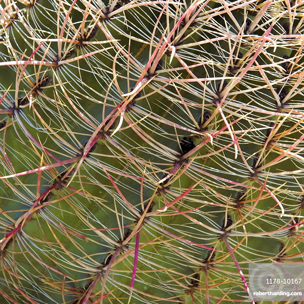 Close up of Barrel Cactus