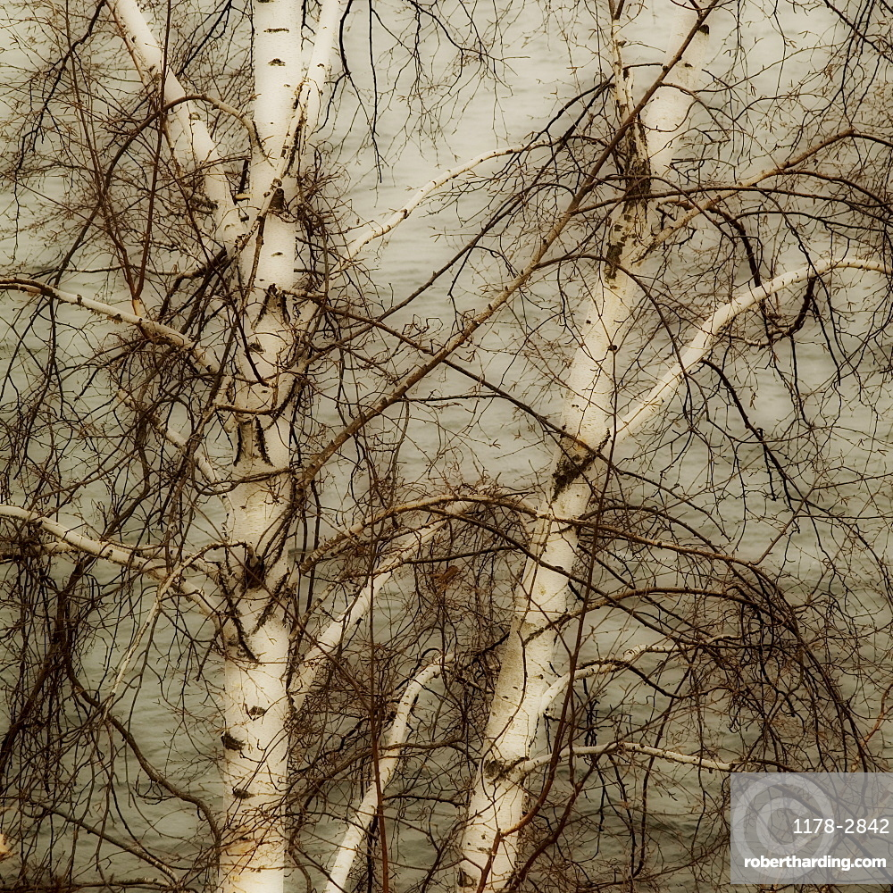 Closeup of tree branches