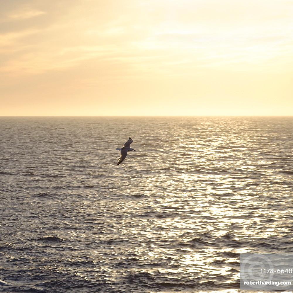 Seagull flying over ocean at sunrise, Mediterranean