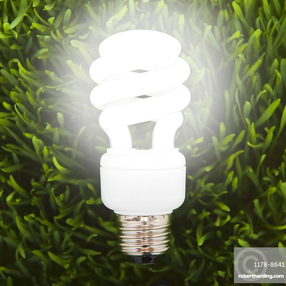 Fluorescent light bulb in grass
