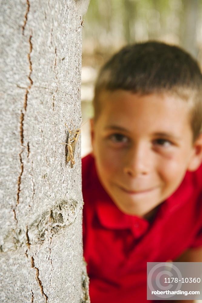 Boy (8-9) playing seekand hide between poplar trees in tree farm