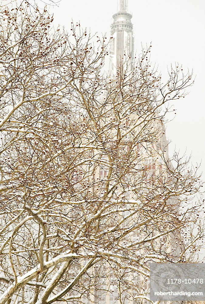 Snow covered tree branches, Empire State Building in background