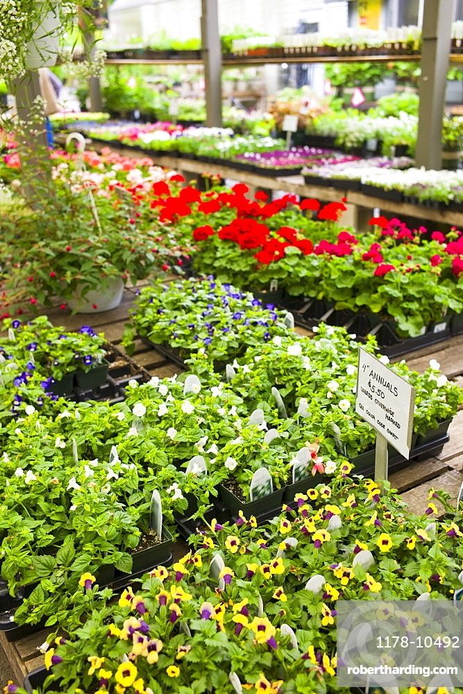 Garden flowers on display in greenhouse