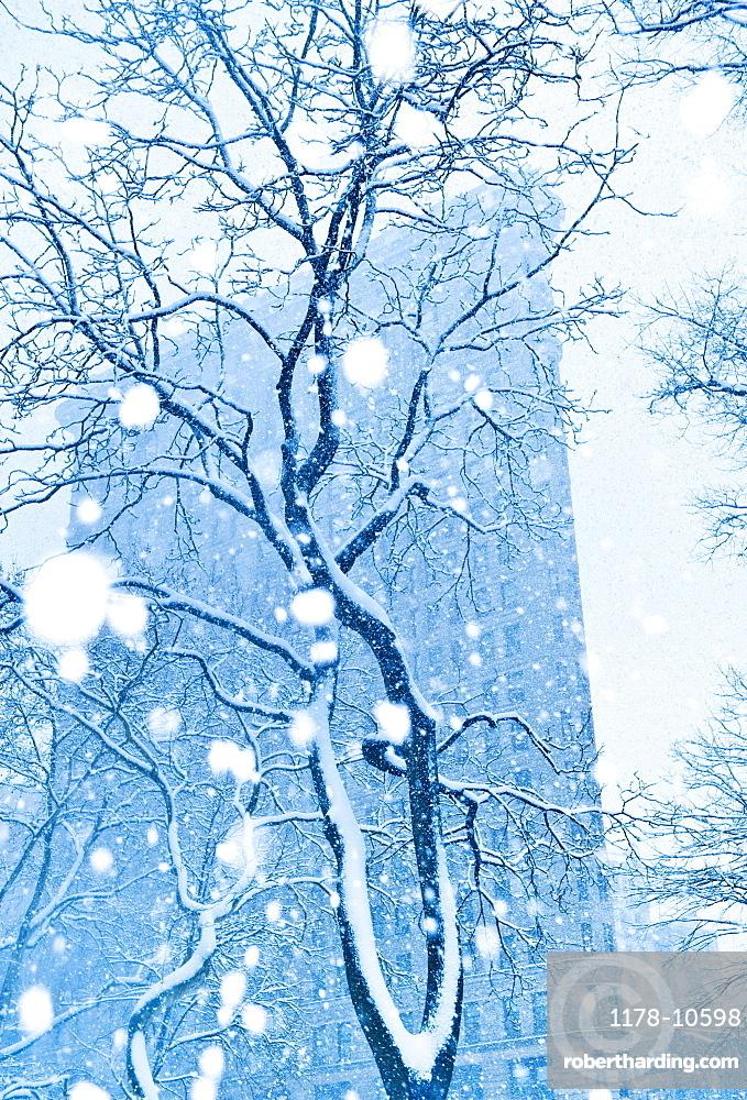 Snowy tree in urban setting