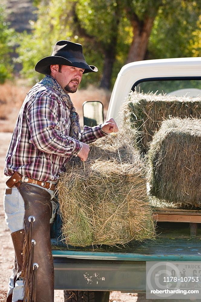 Cowboy lifting bales of hay