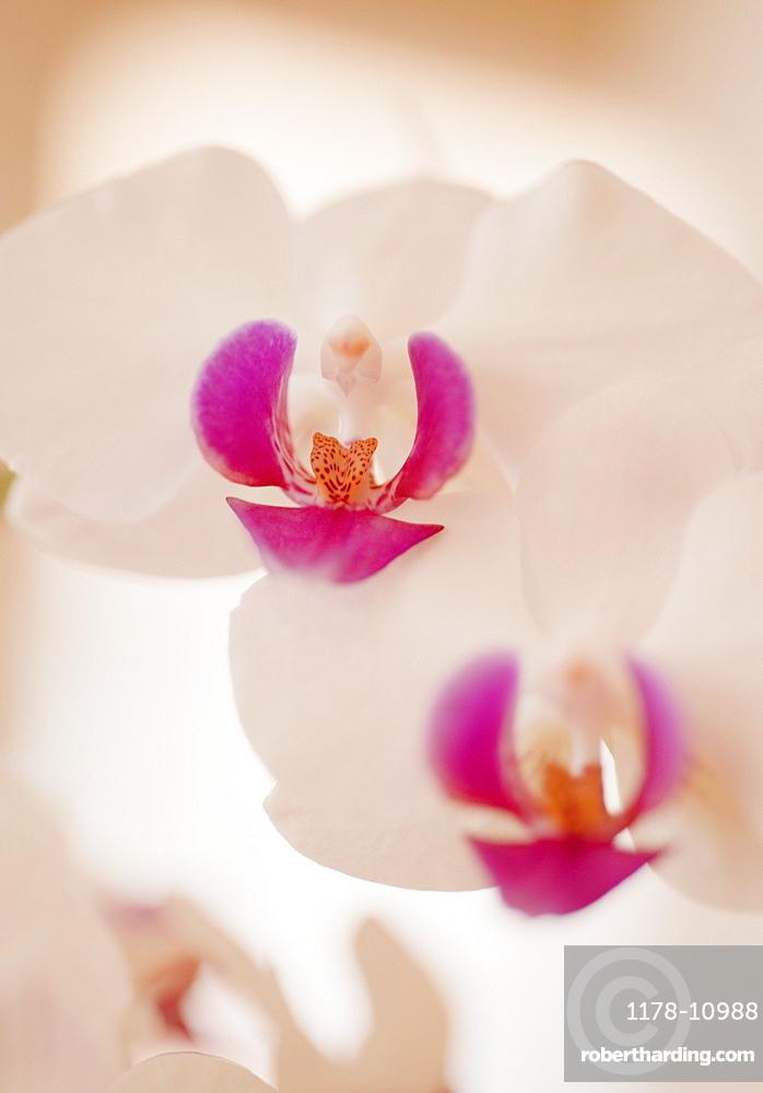Close up of orchid
