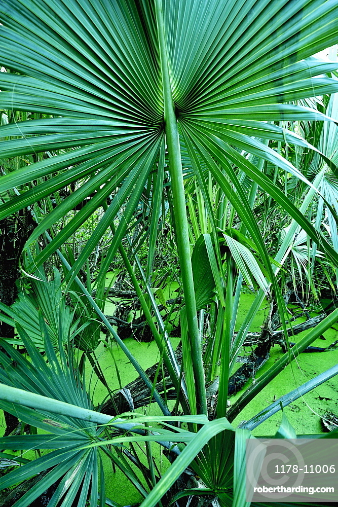 Tropical plants in salt pond