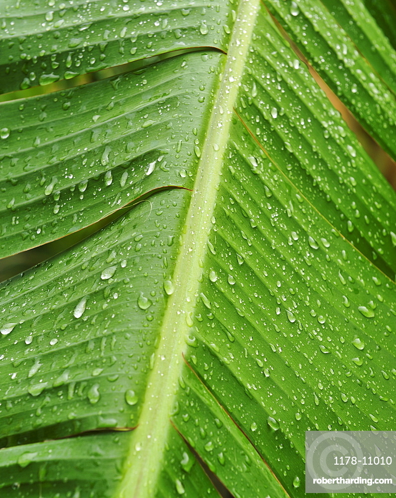 Close up of wet tropical leaf